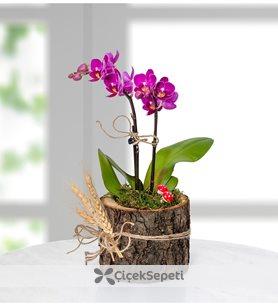 Özel Tasarım Çiçeklerde % 40 İndirim